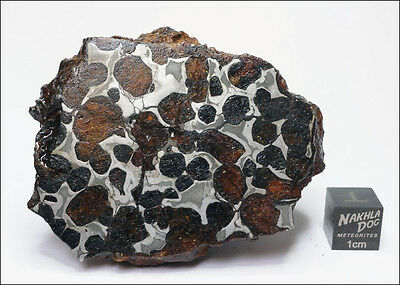 New Pallasite Meteorite from Habaswein, Kenya - 188 grams
