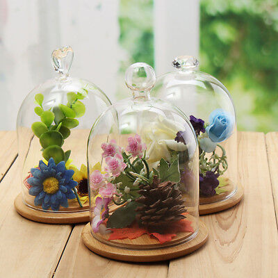 Glass Flower Display Cloche Bell Jar Dome Immortal Preservation +Wooden Base 1pc