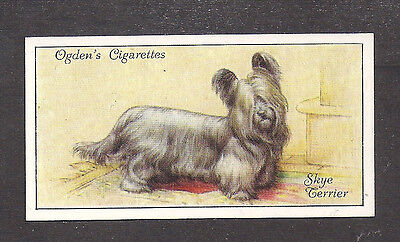 Rare 1936 UK Dog Art Full Body Portrait Ogden's Cigarette Card SKYE TERRIER