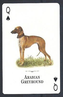 Single Dog Tomas Markevicius Art Trade Playing Card SALUKI SLOUGHI Natural World