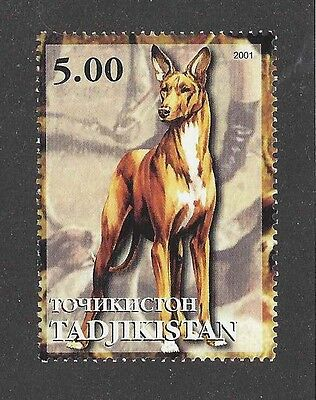Dog Art Full Body Portrait Postage Stamp PHARAOH HOUND Tadjikistan 2001 MNH