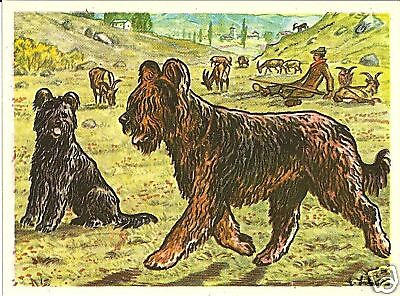 1952 Rare Dog Art Print Austria Tobacco Company Bildwerk French Sheepdog BRIARD