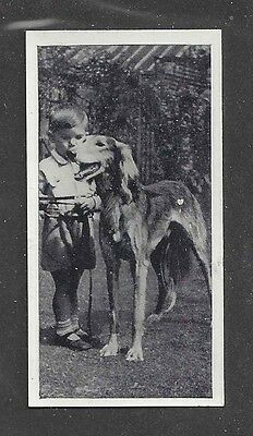 1936 UK Dog & Friend Child Photo Carreras Cigarette Card Grzl Feathered SALUKI