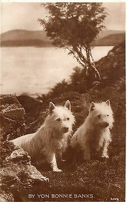 Vintage R.p.postcard.scottish Cairn Terriers.by Yon Bonnie Banks.