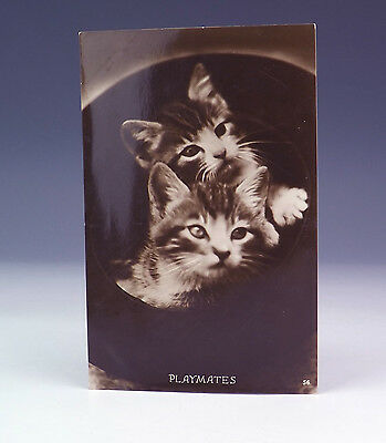 Vintage Playmates - Comical Cats 1940's Postcard - Lovely!