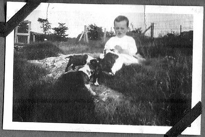 Vintage Photograph 1920's Fashion Of Era Boston Terrier Dogs Puppies Old Photo
