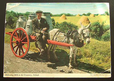 """Postcard : Ireland, """"Delivering Milk To The Creamery"""" Cart & Donkey"""