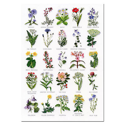 Wild Flowers A5 Identification Card Chart Postcard NEW
