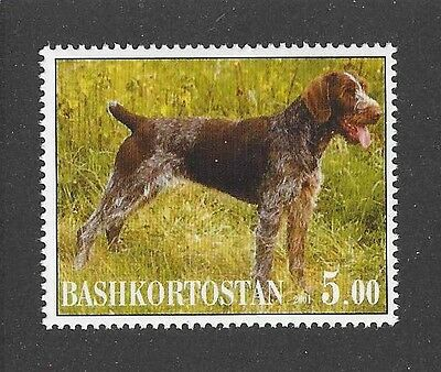 Dog Photo Body Postage Stamp GERMAN WIREHAIRED POINTER Bashkortostan 2001 MNH