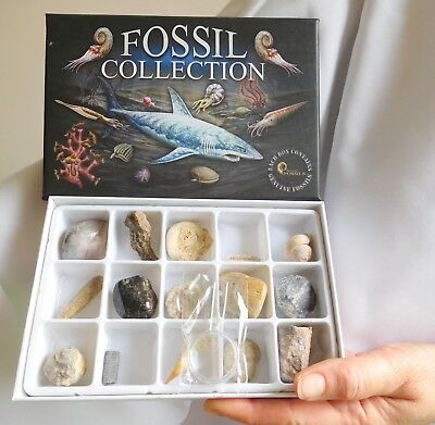 15 Ass Genuine Fossils In Box Ammonite Bivalve Ammonite Gastropod Kids Xmas Gift