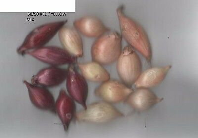 1/2 Kg Mixed Spring Planting Onion Sets Apx 60 Red Baron + 60 Stuttgarter