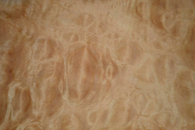 Quilted Maple Raw Wood Veneer Sheets 7.5 x 28 inches 1/42nd thick        6773-4