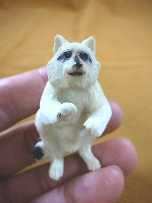 (Rac-3) white Raccoon begging of shed ANTLER figurine Bali detailed carving coon