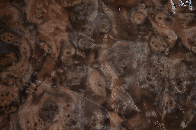 Walnut Burl Raw Wood Veneer Sheet 1/42nd thick                       IFPa7369-20