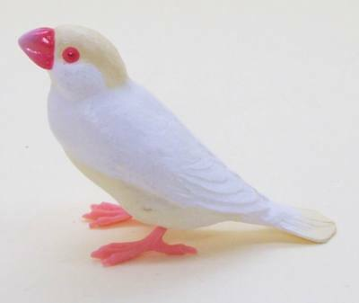 Shine-G Java rice sparrow finch cream color figure pet US seller New