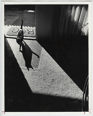 VINTAGE 1980 Striking View of Cat & Shadow in Brightly Lit Doorway Press Photo