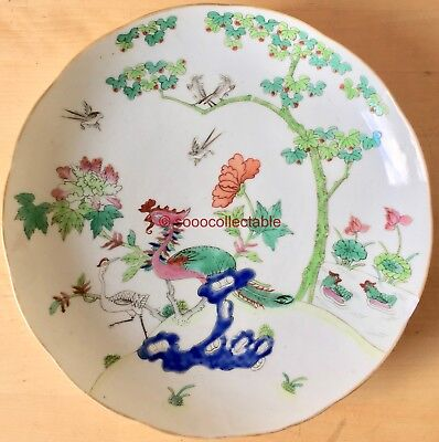 SIGNED 6 ch. mark antique CHINESE FAMILLE ROSE PORCELAIN DISH BIRDS in TREE