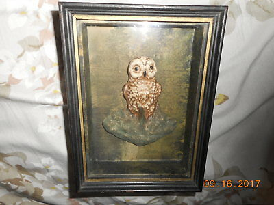 Aafa Vintage Shadow Box  Painted Wax Owl Against Hand Painted Forest Scenery