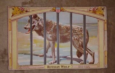 Vintage 1901 CHICAGO AMERICAN Newspaper Supplement Zoo Animal RUSSIAN WOLF