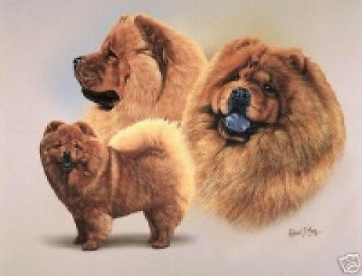 Robert J. May Multi Study - Chow Chow