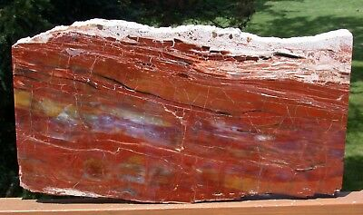 "SiS: 18""+ Arizona Rainbow Petrified Wood Slab - STUNNING RIP CUT PLANK!!"