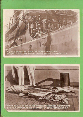 #b.   Two   Fishing   Postcards - Shark Caught At Suez, Human Head, About 1900