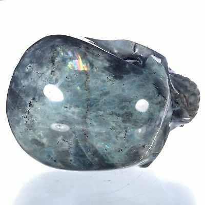 """7.91"""" Natural Labradorite Hand Carved container skull/ Head,collectibles#24K14"""