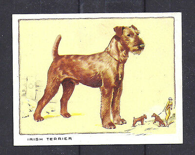 1934 UK Dog Full Body Portrait Gallaher Cigarette Large Trade Card IRISH TERRIER
