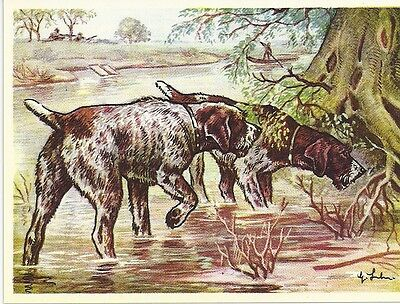 Rare 1952 Dog Art Austria Tobacco Company Trade Card GERMAN WIREHAIRED POINTER a