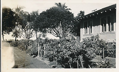 1939 Waikiki Residents Yard Hawaii  photo