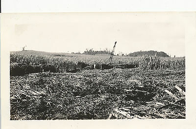 1930s Sugar Cane, crane, cutting cane, Maui Hawaii  photo