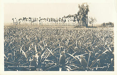 1930s Hawaii A Pineapple Grove, Real Photo Post Card