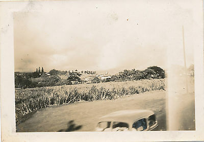 1940s WWII Sugar Cane Field, Hawai'i,  Hawaii  Photo