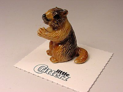 "Little Critterz - LC112 ""Chuck"" Yellow Bellied Marmot"
