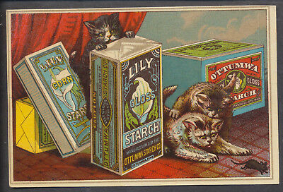 A2007 USA Victorian Advertising: Lily Starch. Cats & Mouse
