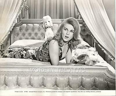 Sexy Ann Margret Bus Riley's Back In Town Original Universal Pictrues Portrait