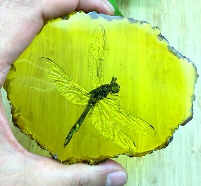 107g Beautiful amber Dragonfly fossil insects manual polishing