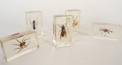 5 Biological Artificial Resin Models of Insects from the 1950's/60's.