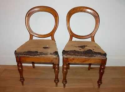 Pair of Antique Mahogany Balloon back chairs ~ perfect restoration project!