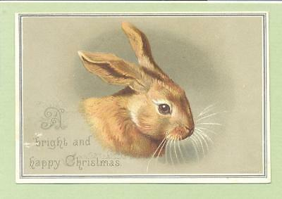 Victorian Signed Helena Maguire Christmas Card , Lovely Bunny Rabbit   014
