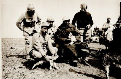 Original Wwi  Photo Western Front France British & French With Goats