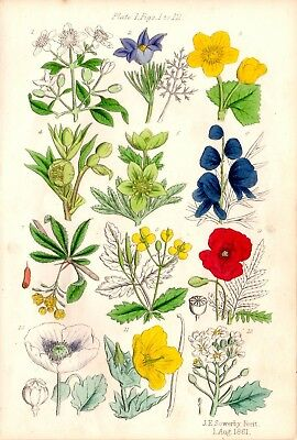 Antique Botanical print Original hand coloured Wild flowers by Sowerby 1861