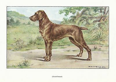1930s Watercolor Art Print Dog Castellan GERMAN WIREHAIRED POINTER / DRAHTHAAR