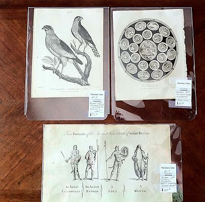 Antique Engravings, Group Lot Of (3): Indian Zodiac, Ancient Inhabitants Of G.b.