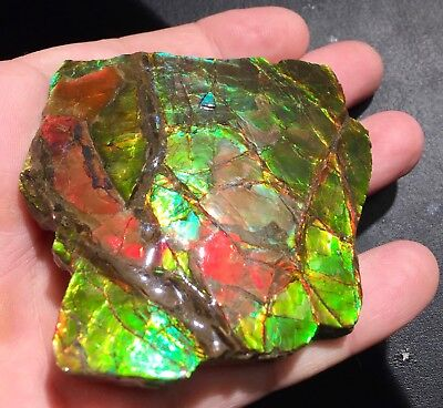 "520 Ct RIESEN AMMOLIT ""DRACHENSCHUPPE"" GEM GRÜN/ROT/GOLD! VIDEO  FLASHFIRE-OPALS"