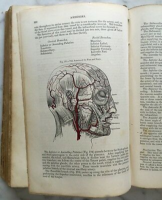 RARE Gray's Anatomy Descriptive and Surgical HENRY GRAY First US Edition 1859