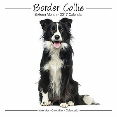 Border Collie Studio Calendar 2017 Avonside Publishing Ltd. Kalender 24/06/2016