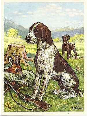 Rare 1952 Dog Art Austria Tobacco Company Trade Card GERMAN WIREHAIRED POINTER b