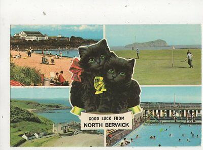 Good Luck From North Berwick Black Cats East Lothian Scotland Postcard 384b