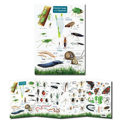 Field Guide Garden Bugs & Beasties Laminated Insect Identification Chart Poster